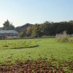 Trinity Road School - Jubilee Wood