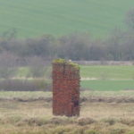 Peregrine on old chimney on River Crouch